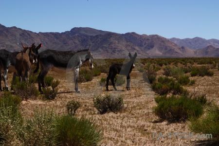 Salta tour mountain mule argentina landscape.