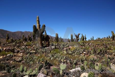 Salta tour unesco landscape plant cactus.