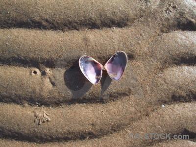 Sand ripple shell beach texture.