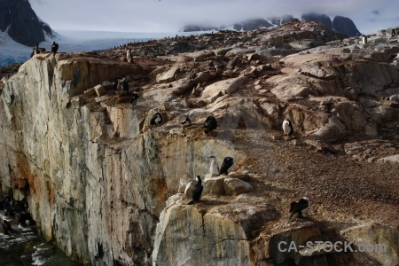 Sea antarctica cruise bird antarctic peninsula mountain.