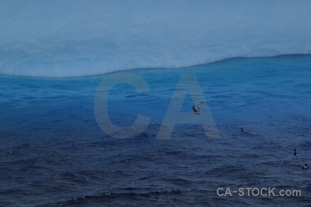 Sea antarctica cruise ice day 4 bird.