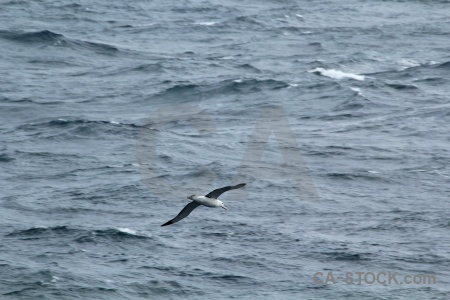 Sea cape horn wave drake passage bird.
