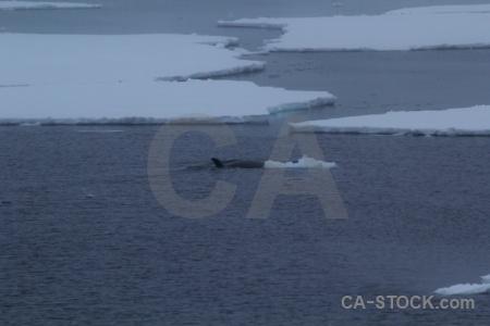 Sea water antarctica cruise sea ice antarctic peninsula.