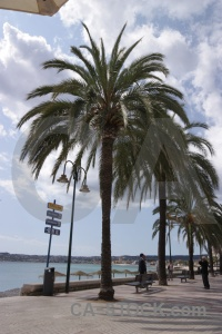 Sea water europe palm tree sky.