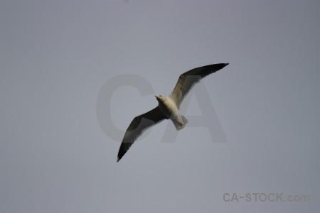 Seagull animal bird sky flying.