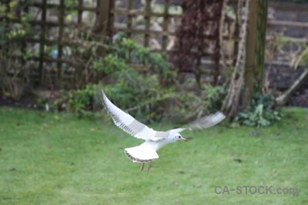 Seagull bird flying green animal.