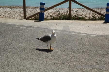 Seagull bird granadella animal spain.