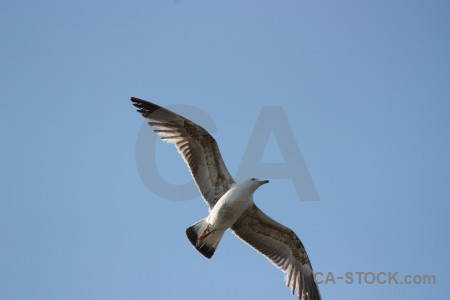 Seagull bird sky flying animal.