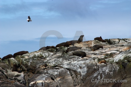 Seagull fiordland fiord bird seal.