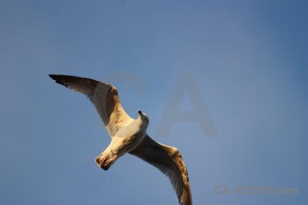 Seagull sky animal bird flying.