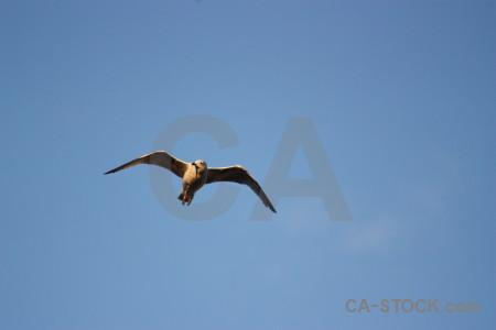 Seagull sky animal flying bird.