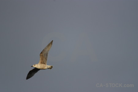 Seagull sky bird flying animal.
