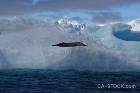 Seal argentine islands sky snow antarctica.