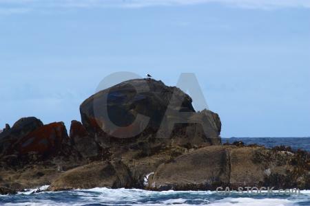 Seal fiordland fiord sky sound.