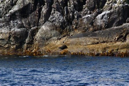 Seal rock fiord new zealand doubtful sound.