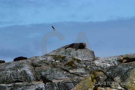Seal seagull sound cloud animal.