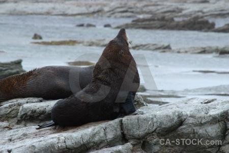 Seal water animal south island sea.