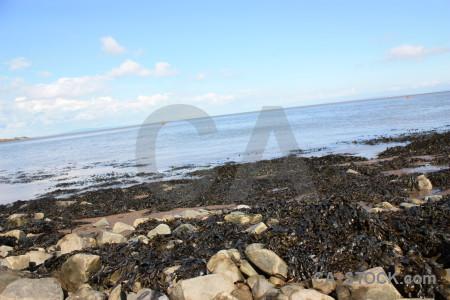 Seaweed rock landscape coast.