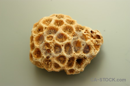 Shell brown coral orange.