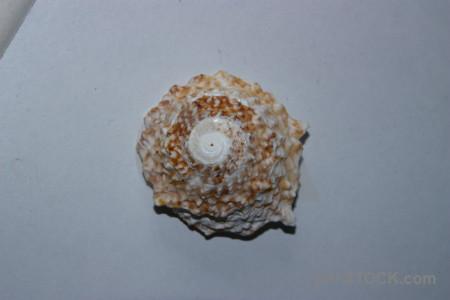 Shell object.