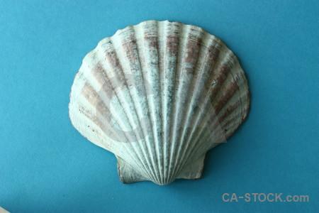 Shell object cyan.