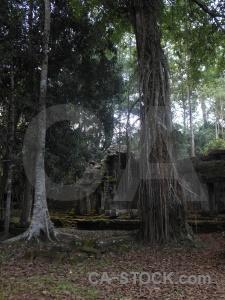 Siem reap khmer leaf stone ruin.