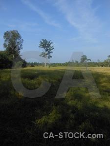 Siem reap sky cloud prasat banteay srei field.