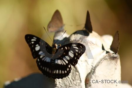 Siem reap trek butterfly cambodia southeast asia.