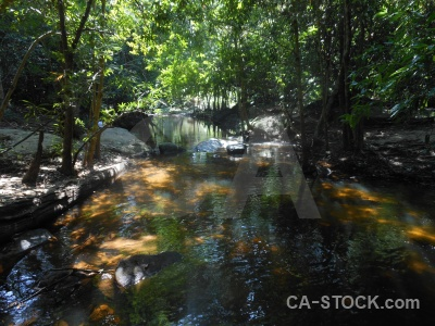 Siem reap trek kbal spien cambodia tree.