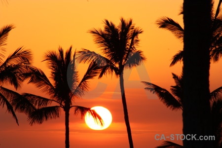 Silhouette sky sunset palm tree sun.