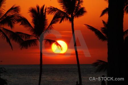 Silhouette sky sunset palm tree sunrise.