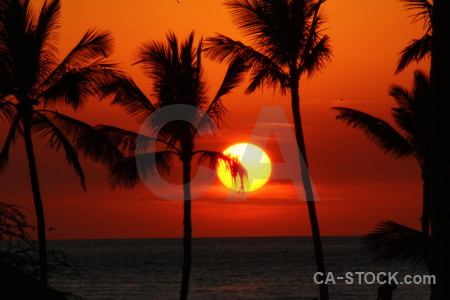 Silhouette sunrise sunset palm tree sun.
