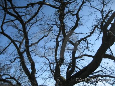 Single blue tree.