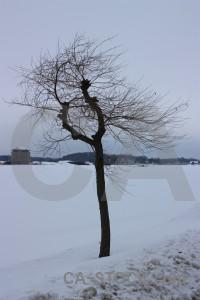 Single landscape snow winter tree.
