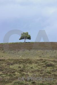 Single tree.