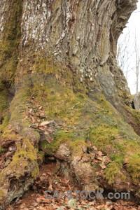 Single tree brown.