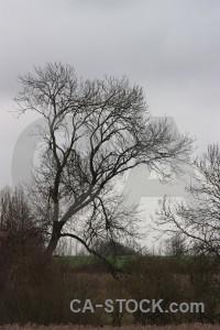 Single tree gray.