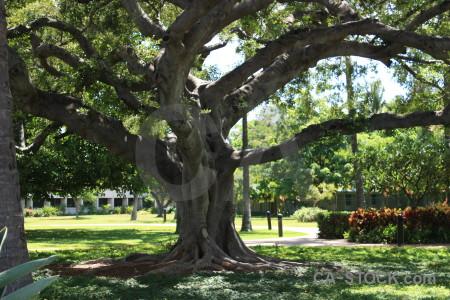 Single tree green.
