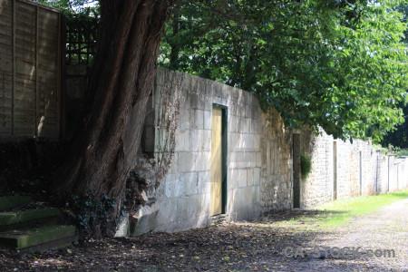 Single tree green wall.