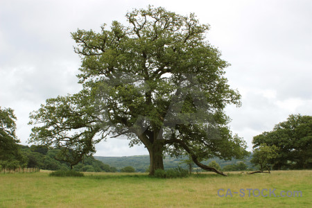 Single tree green white.
