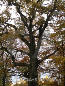 Single tree white.