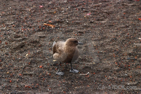 Skua whalers bay antarctic peninsula day 11 volcano.