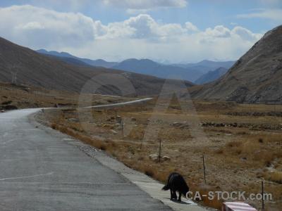 Sky altitude plateau tibet dog.