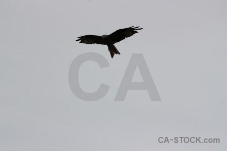 Sky animal bird flying gray.