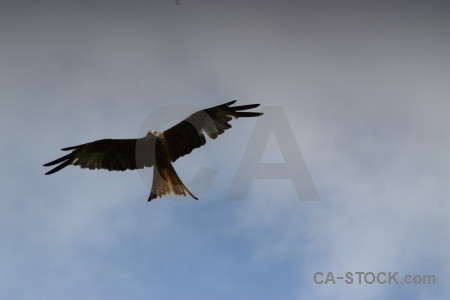 Sky animal flying bird.