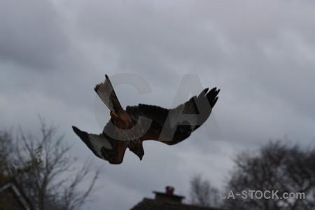 Sky animal gray bird flying.