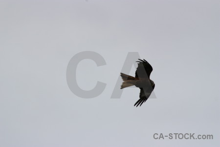 Sky animal gray bird flying.