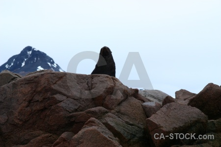 Sky animal ice day 6 fur seal.