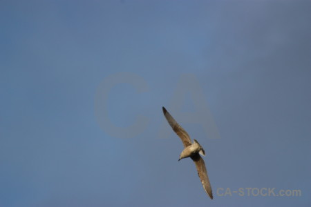 Sky bird flying animal seagull.