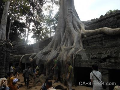 Sky buddhist khmer siem reap fungus.